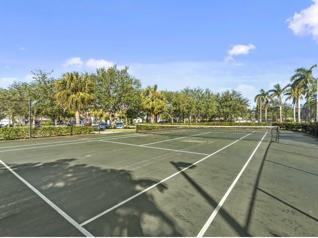 Large community tennis court surrounded in palm trees