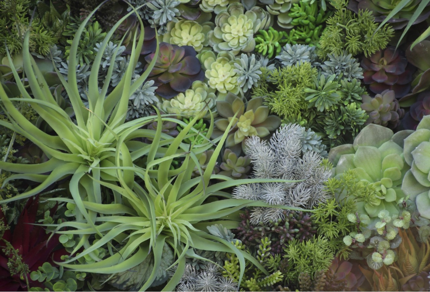 A grouping of green and yellow succulent plants.