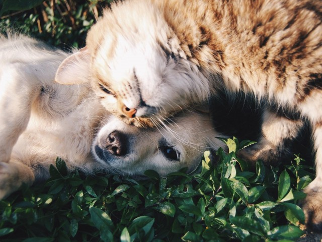 The Strand view of dog and cat lying in the grass
