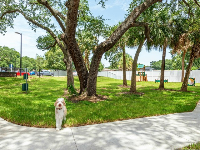 bark park shaded by mature trees