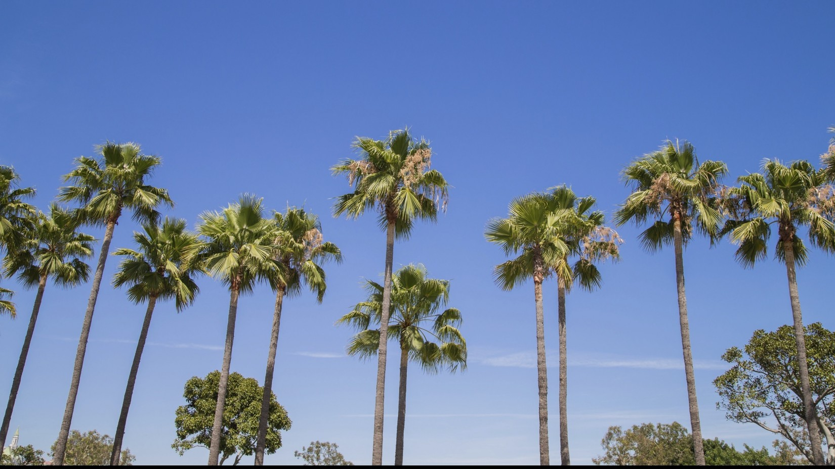 The Palms at Peccole Ranch