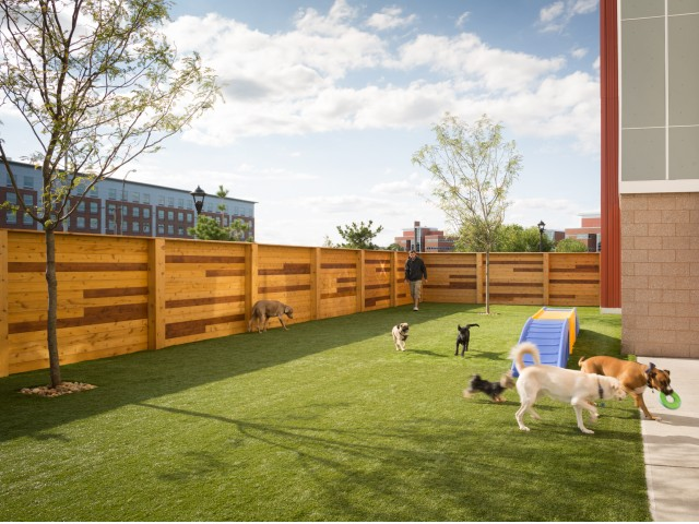 Image of Fetch: The On-site Dog Day Care & Spa for One North of Boston