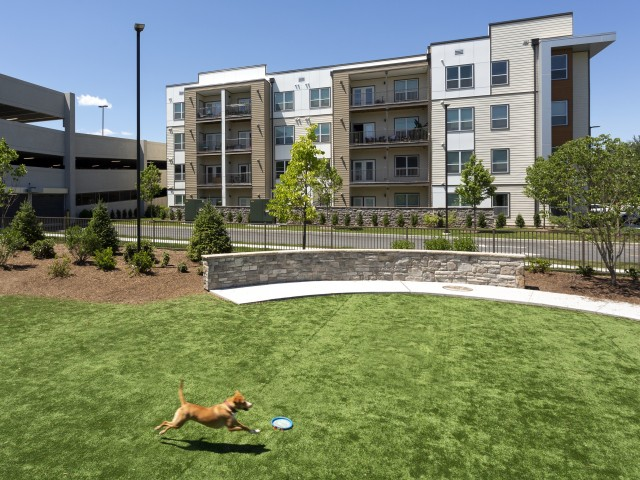 Image of Bark Park : outdoor pet play area for The Mave