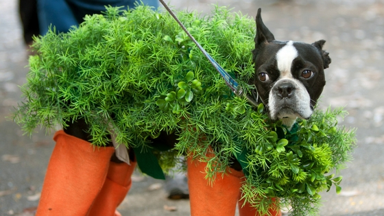 Pet Halloween Costume Ideas-image