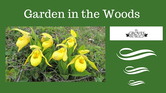 The Garden in the Woods -- A New England Treasure-image