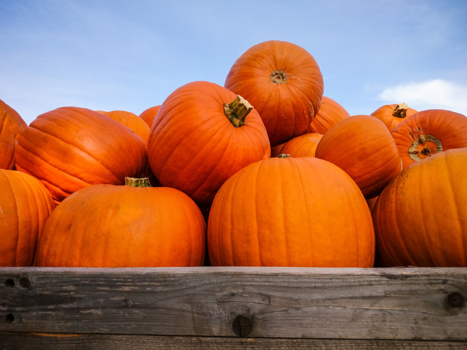 All Things Pumpkin for Halloween-image