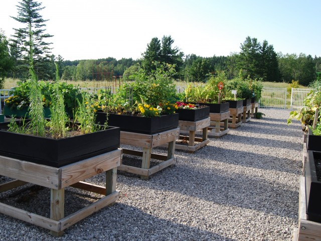Image of Community Garden & Composting for Liv Arbors