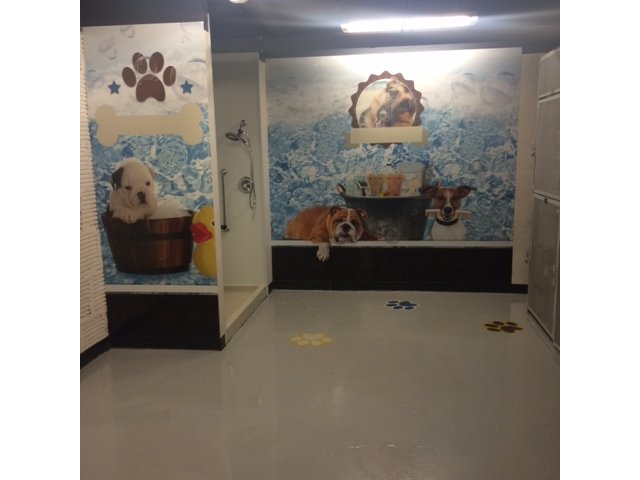 Image of Pet Grooming Room for The Albert