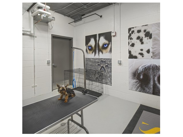 Image of Pet Grooming Salon for The Scott at Brush Park