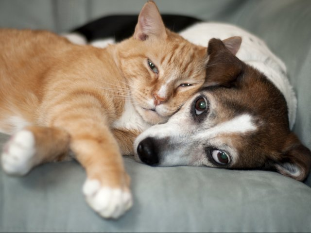 Image of Dog and Cat Friendly for Breckenridge Apartment Homes