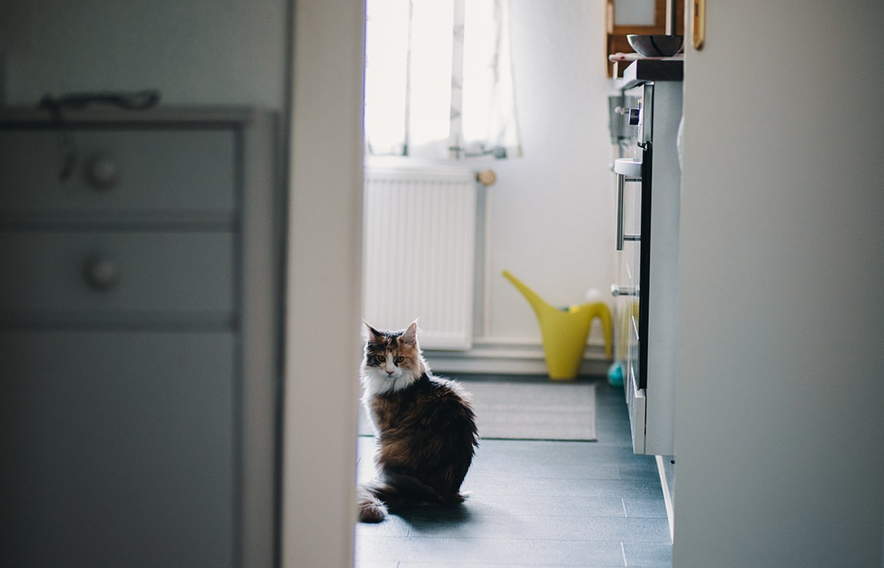 How to Keep Cats off Your Counter Tops-image