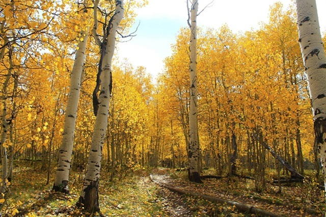 Eight Things to Do This Fall!-image