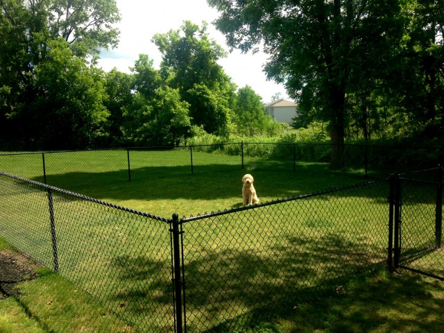 Long Pond Village Apartments, exterior, grassy fenced dog park, large trees and shade