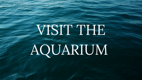 Visit the Aquarium-image