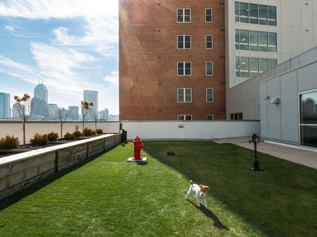 Image of Rooftop Dog Park for 9 on Canal