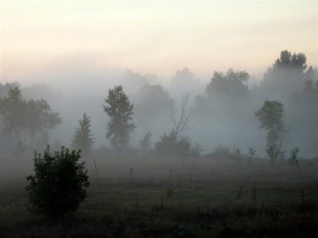 RedFox Meadows Natural Area