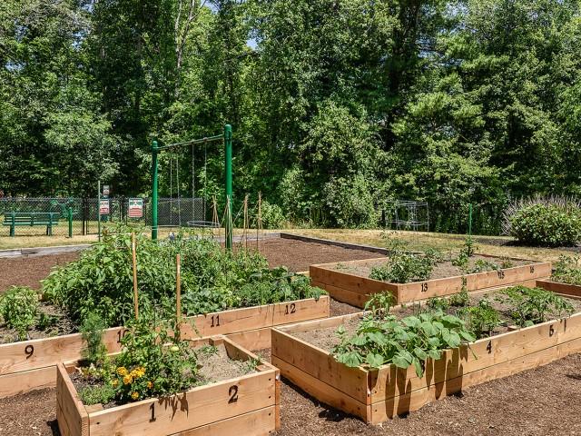Apartment community garden plots | Residences at Westborough
