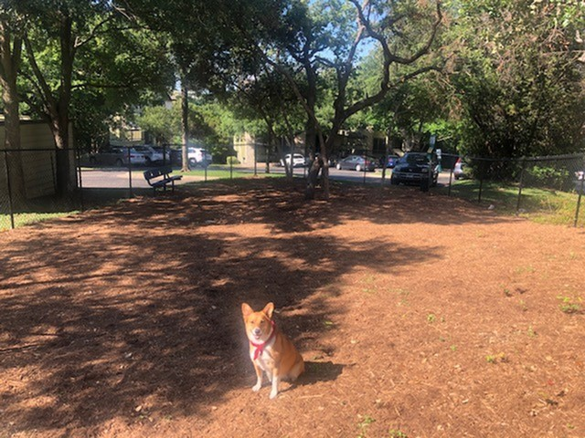 dog in community dog park