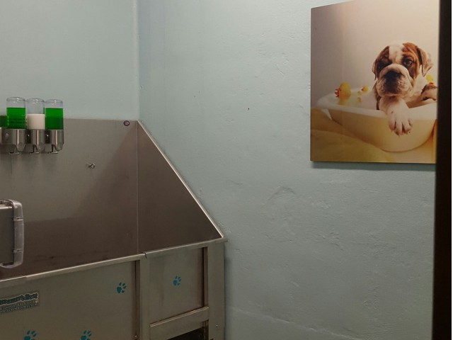 Image of Dog Spa/Bath Area for The Junction