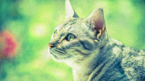 Celebrate National Cat Day