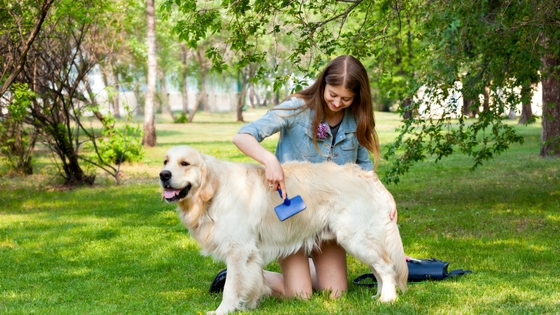 How to Keep Your Pet Comfortable this Summer-image