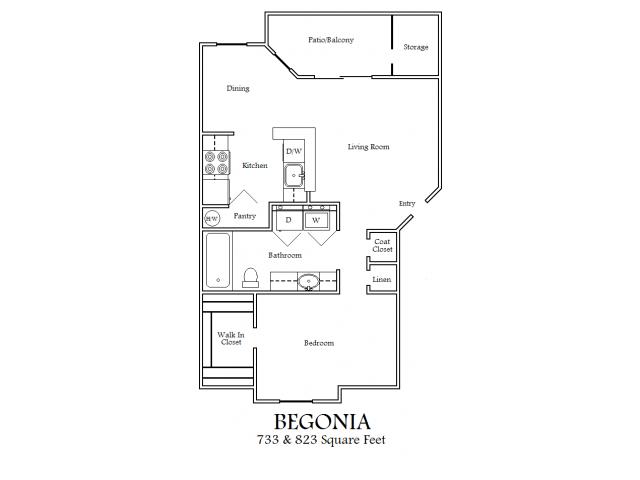 1X1 Begonia