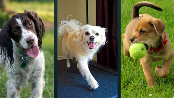 Welcoming Pets at Willow Hill Apartments-image