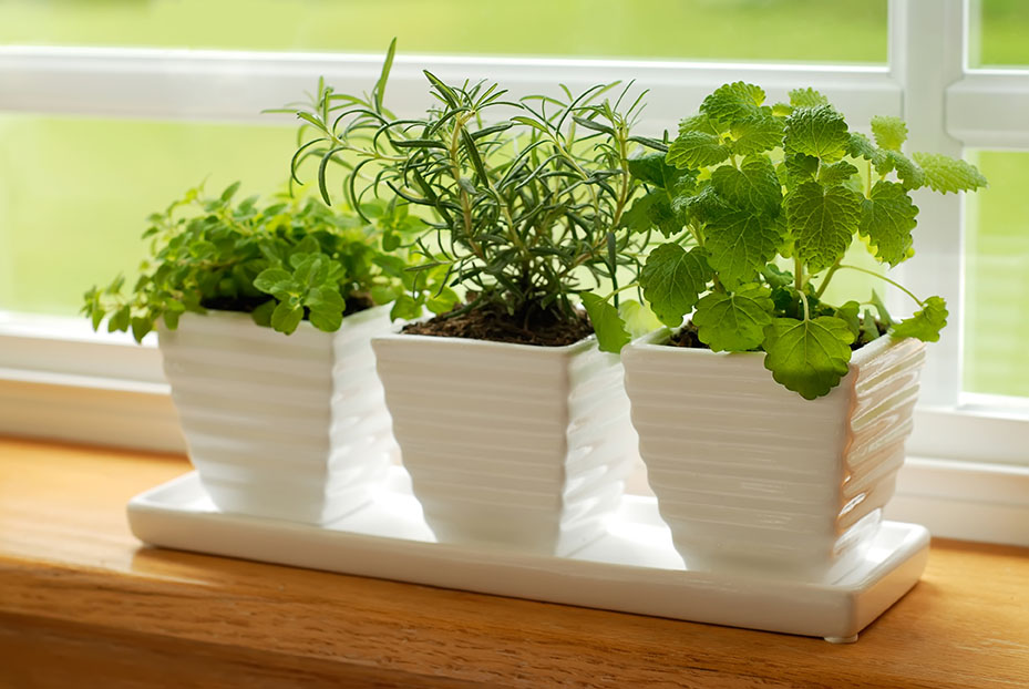 A Guide to DIY Apartment Herb Gardens