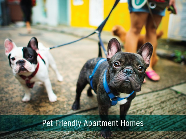 Pet Friendly | Luxury Apartments in Kansas City Missouri | Gallerie