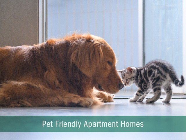 Image of Pet Friendly Community for Marcato