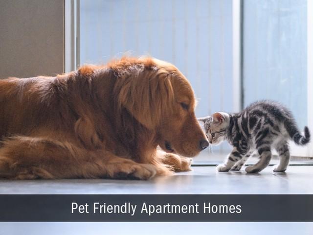Pet Friendly Apartments, Indianapolis, Broad Ripple