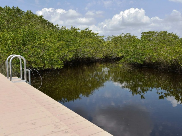 Image of Kayak Launch Into Creek With Direct Access to Manatee River for ParkCrest Landings